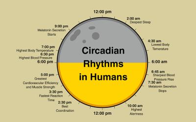 Los ritmos circadianos