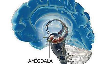 La importancia de la amigdala cerebral en el mecanismo del miedo